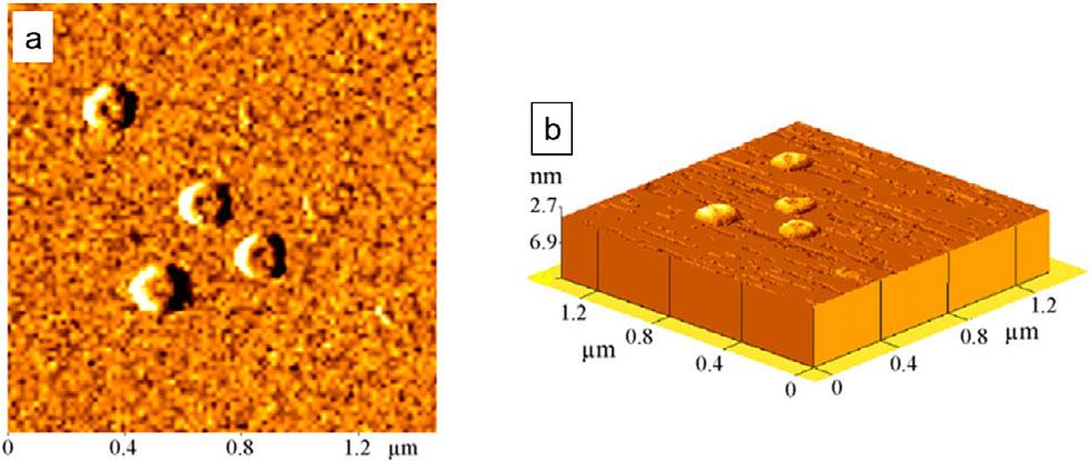 Fig. 10. AFM image of liposomes prepared in hydrated state by non-contact mode: a) topography and b) 3 D-view. Reprinted from ref. 49, with permission of Elsevier.