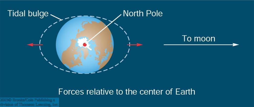 The Tides Caused by the Moon s differential gravitational attraction of the water on the Earth Forces are balanced at the center of the Earth Excess