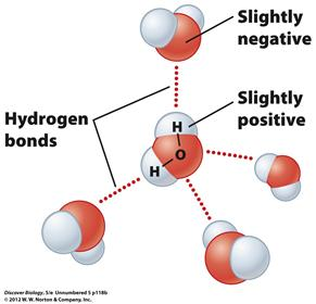 that make one end of the molecule slightly negative and the other end slightly positive Hydrogen bonds form