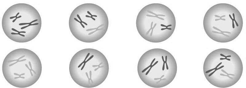 Differences between meiosis I and mitosis Meiosis-I Prophase I: Homologs pair up. Mitosis Prophase: Homologs do not pair. Crossing over between homologous chromosomes.