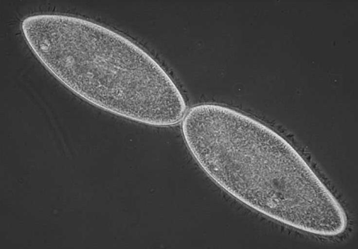 What is Cellular Reproduction?