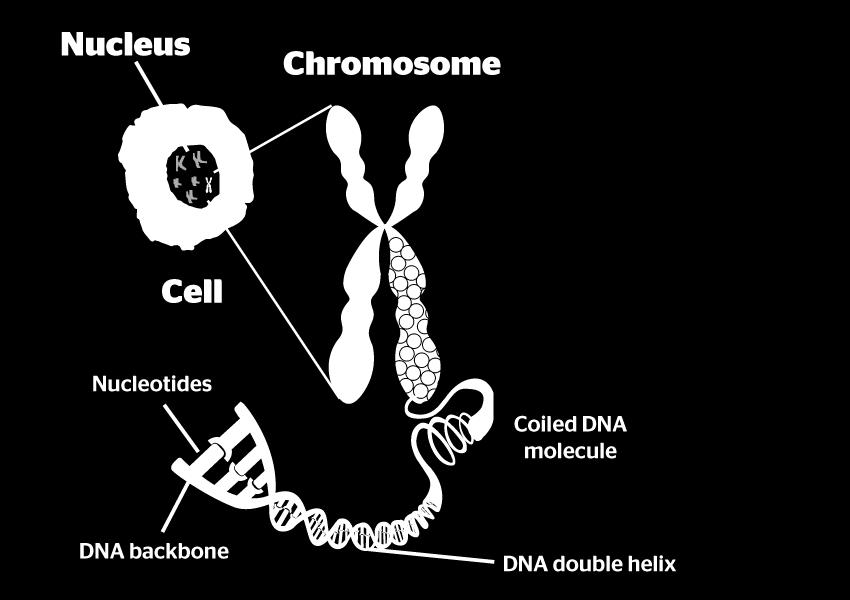 What are Chromosomes?