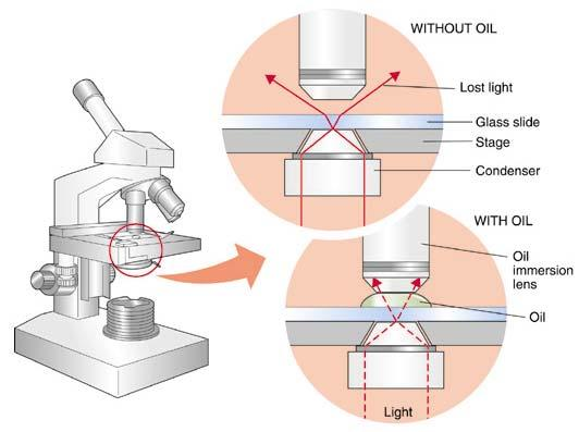 Three main components of a microscope 1. Ocular 2. Objective lenses 3.