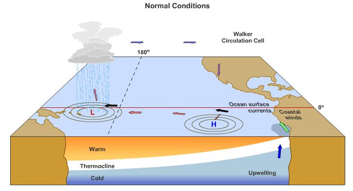 Normal conditions in Pacific (cont.