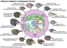 birds specialize by particular types of