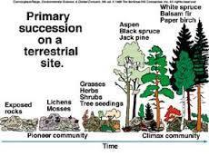 Ecological Succession Somewhat predictable series of changes over time
