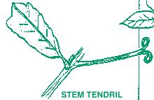 Tendril Examples are