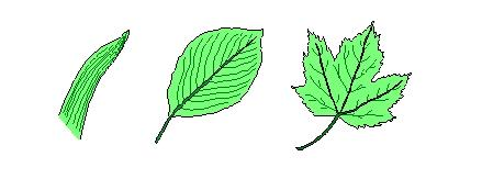 Types of Leaves Simple A