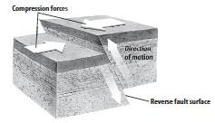 TENSION = NORMAL NORMAL Forces of tension inside Earth cause rocks to be pulled apart. When rocks are stretched by these forces, a normal fault can form.