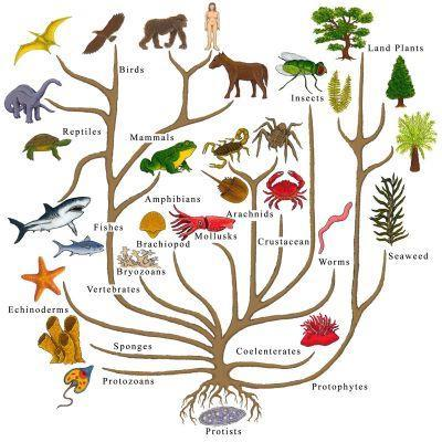 Biologists estimate that there are about 5 to 100 million species of organisms living on Earth today.