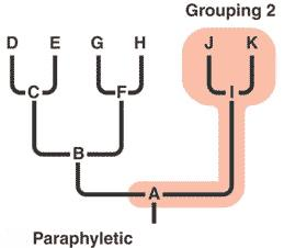 On the other hand, a clade is described to be paraphyletic if it