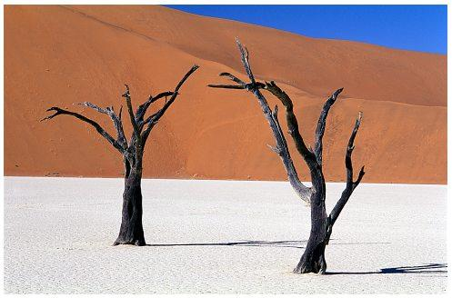 The scorching Namib desert in Africa cools