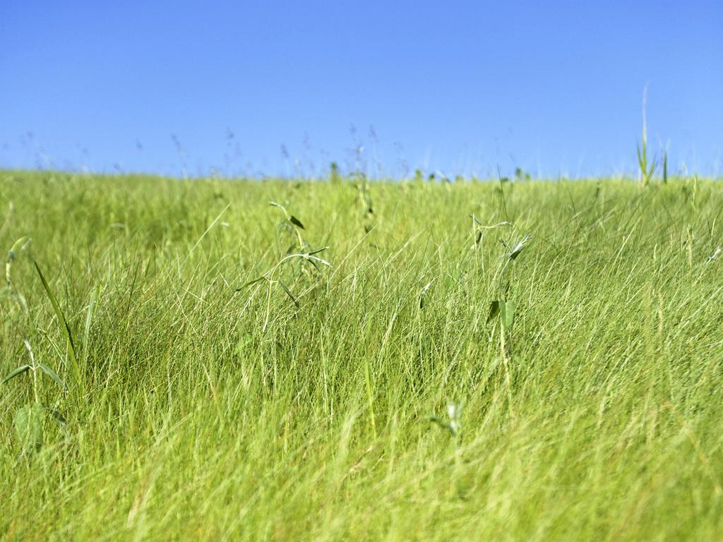 GRASSLANDS Grassland (prairie)= An area that is populated mostly by grasses and other