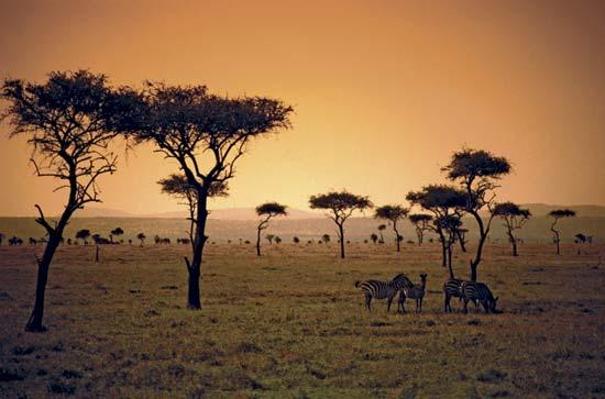 Savanna: Grassland that is located closer to the