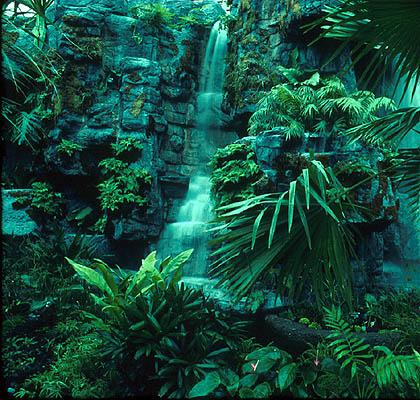 RAIN FORESTS There are 2