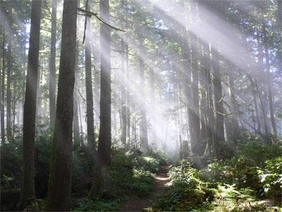 TEMPERATE RAIN FORESTS Temperate = having moderate temperatures. Northwestern coast of U.S. is a temperate rain forest.