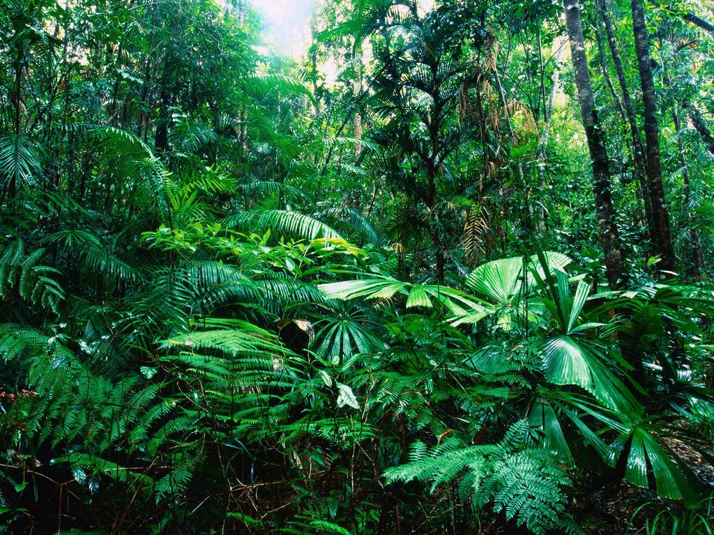 TROPICAL RAIN FORESTS Found in regions close to the equator Warm