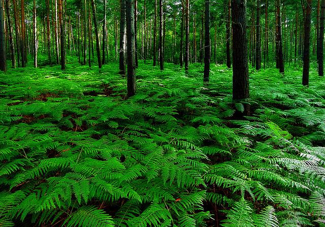 Understory plants grow well in the shade formed by the canopy,