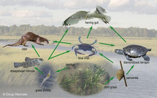 Energy Flow Food Web Links all the