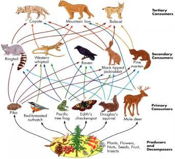 animals omnivores can survive on either plants or animals scavengers feed on the bodies of dead organisms decomposers
