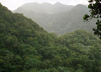 Tropical Rainforest Typically found near the equator Receives more than 200 cm of rain annually Temperatures typically fall between 20 o C and 25 o