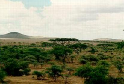 Tropical Savanna Tropical grasslands with a few scattered trees Experience wet and dry seasons Hot