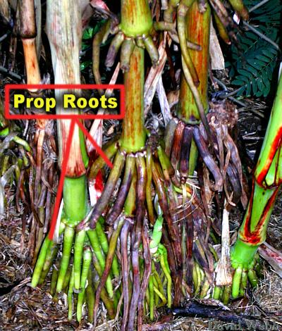 Root Types: Fibrous = many branching roots (ex. grass, trees, green onions etc.