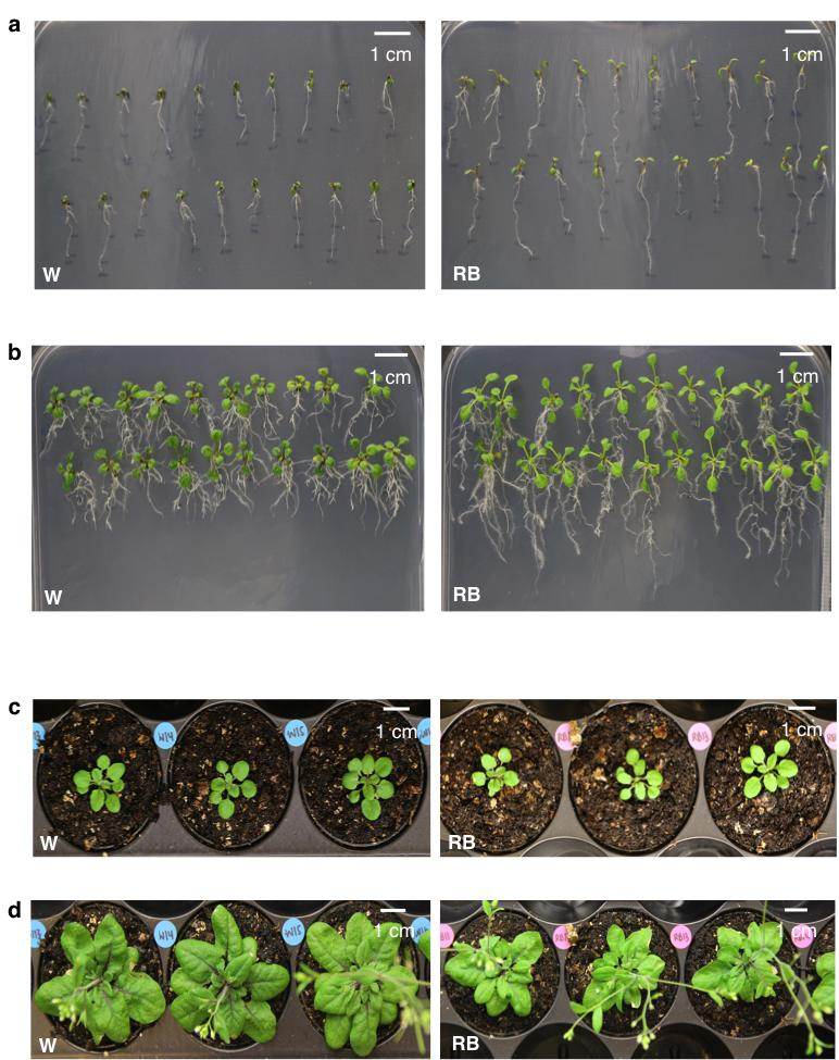 182 Supplementary Figure S5 183 Growth and development of laser-treated F1