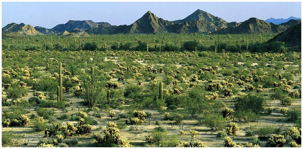 Deserts Soils low in nutrients and high in salts Vegetation sparse