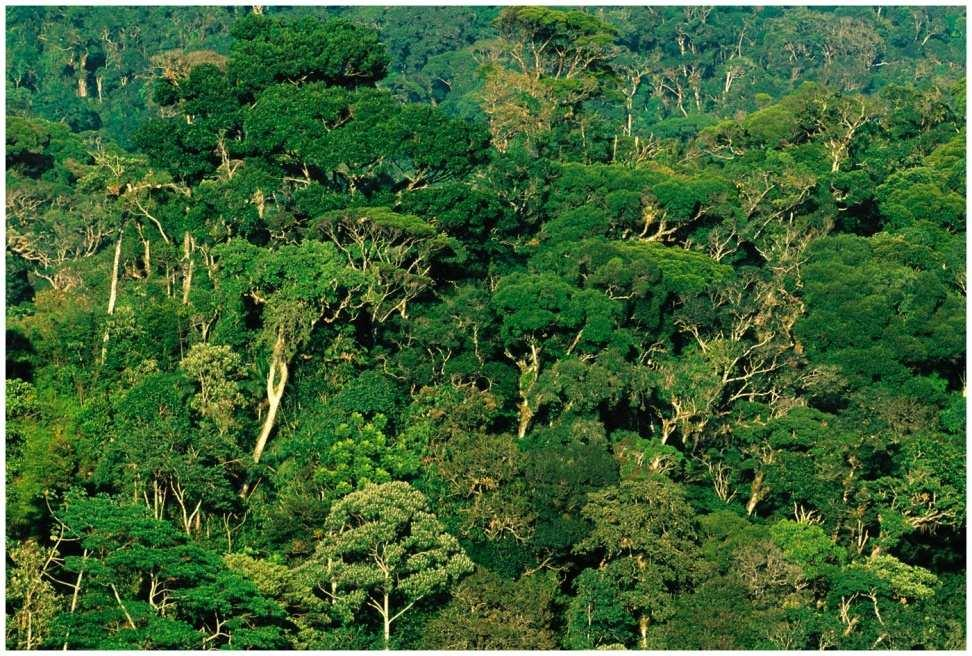 Tropical Rainforest Ancient, weathered, nutrient-poor soil Nutrients tied up in vegetation, not
