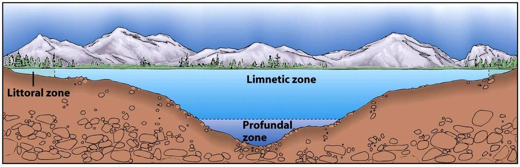 Lakes and Ponds Littoral Zone - shallow water area along the shore Limnetic Zone - open