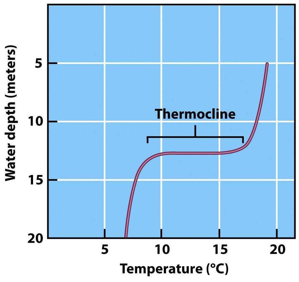 Thermal Stratification Temperature changes sharply with depth Thermocline Temperature
