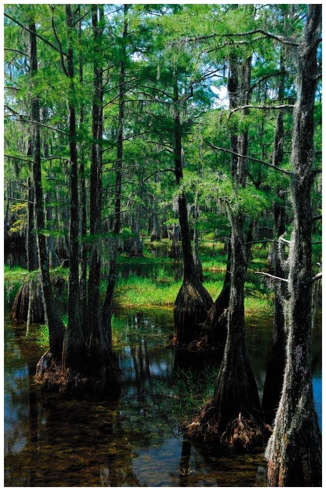 Marshes and Swamps Lands that shallow, fresh water covers for at least part of the year Were once regularly