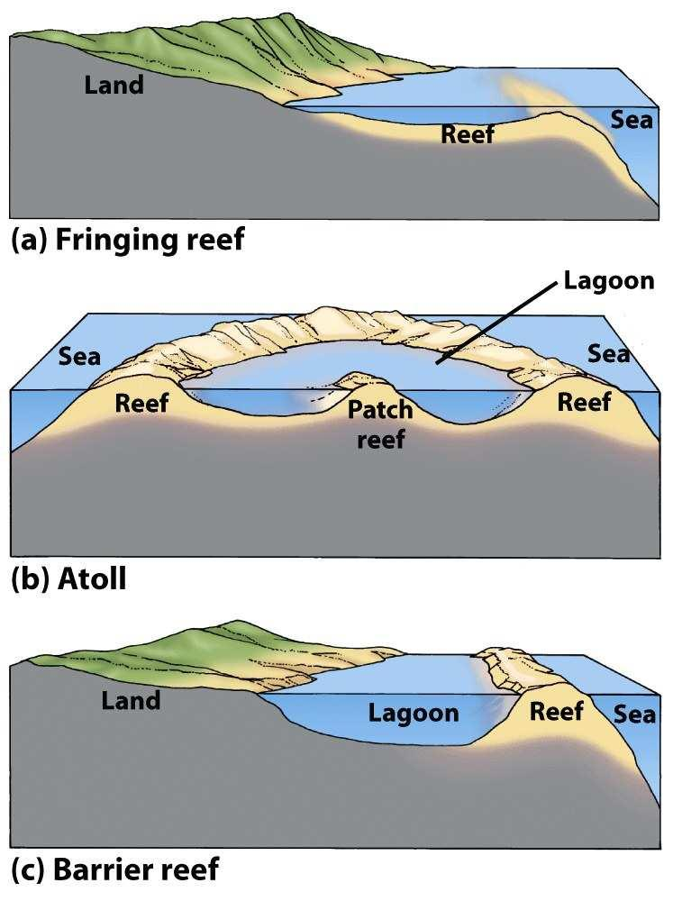 Coral Reef Environments Three types of coral reefs Fringing reef - directly attach to