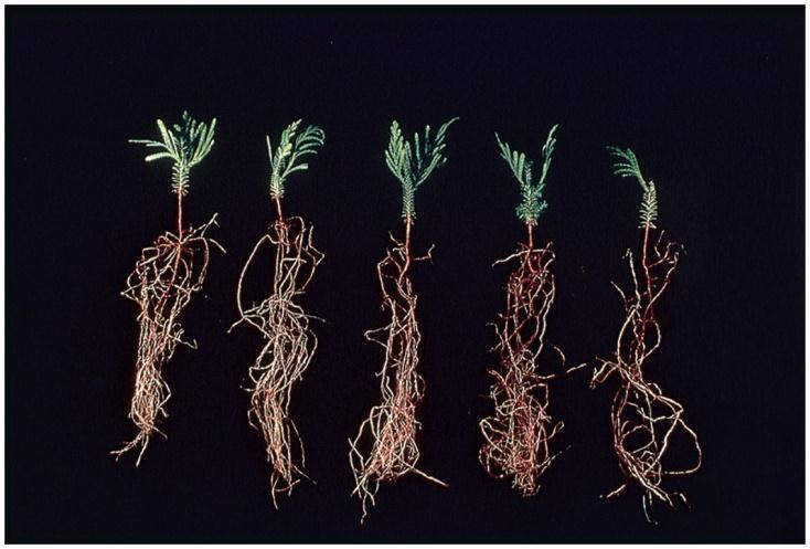 members benefit Ex: Mycorrihzal fungi and plant roots