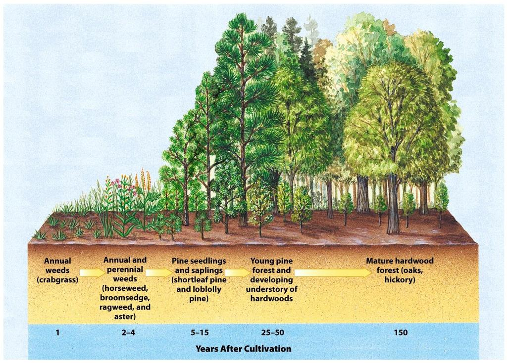 Secondary Succession of an