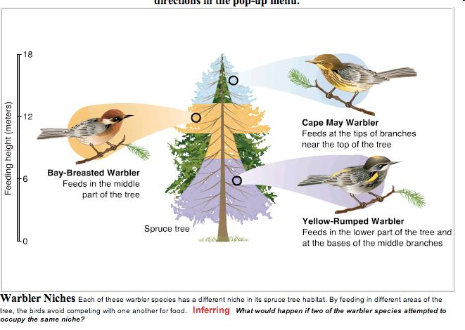 3. Why can these birds live in the