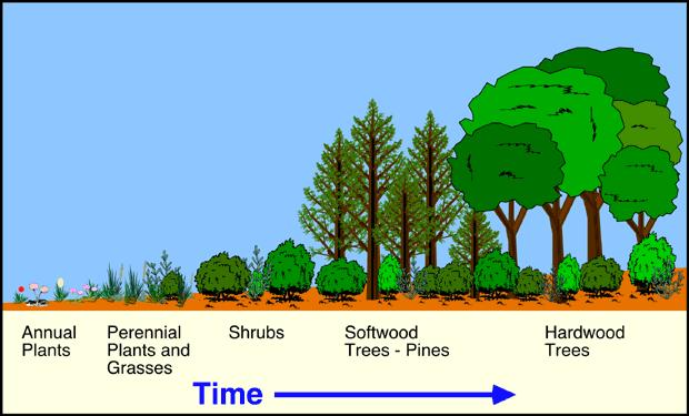 Change in Ecosystems or Communities over time Ecological Succession: Communities change over time in a