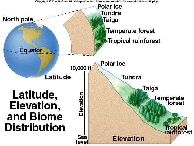 Increasing altitude has a similar effect on ecosystems as increasing latitude.