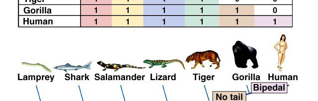 vertebrates with four legs to be grouped together.