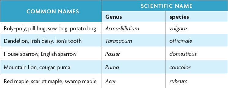Binomial Nomenclature Scientific names help scientists to