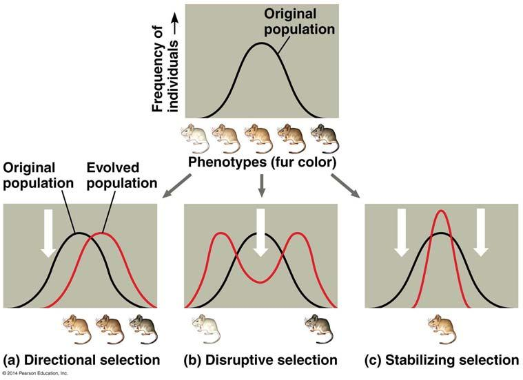 At the population level, changes in allele frequencies can cause evolutionary change There are three primary mechanisms that cause most evolutionary change Natural Selection described by Darwin.