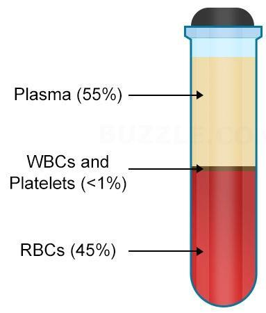 Components of Blood Component Scientific name Property Plasma Red blood cells(rbcs) Erythrocytes Liquid port of blood Contains clotting factors, hormones, antibodies, Dissolved gases, nutrients, and