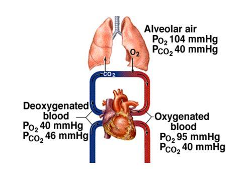 Lung and gas