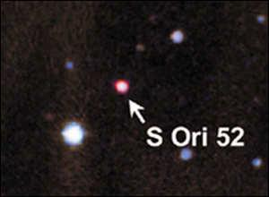 low mass young brown dwarfs that could be planets (>8 Mjup), which do not orbit a