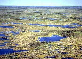 Tundra Treeless or marshy plain Characterized by permafrost permanently frozen soil
