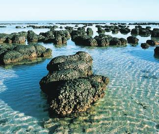 Figure 10 Cyanobacteria use sand and salt from the oceans to build stromatolite mounds similar in some ways to how corals build reefs.