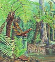Plants of the Paleozoic Era The first plants developed in the ocean from green algae. During the Ordovician period, plants spread onto land.