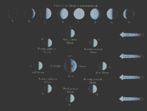 Lunar Phases Kaufmann & Comins 4/e cycle of phases determines