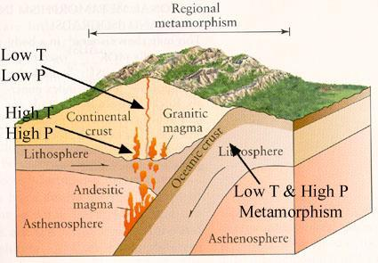Tectonic Settings and Types of Metamorphism Tectonic Settings of Metamorphism 1) All types of plate boundaries 2) Hot spots 3) Any other